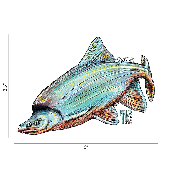 Humpback Chub Sticker