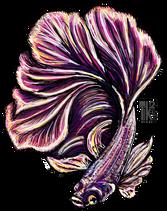Beta Fish.png