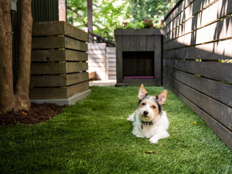 Ways to use turf in your side yard