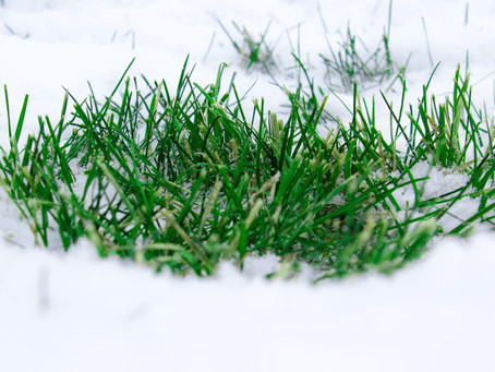 3 Things you need to know about turf in winter