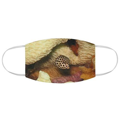 Juvenile Spotted Trunk Fish - Fabric Face Mask