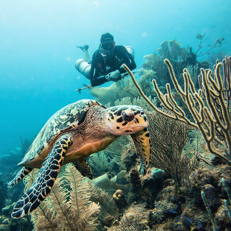 Why I'm Obsessed With Underwater Photography - SCUBA Photography
