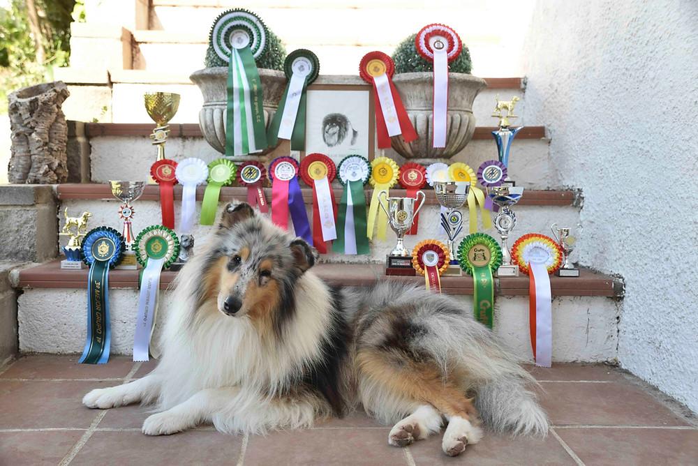siglas exposiciones caninas