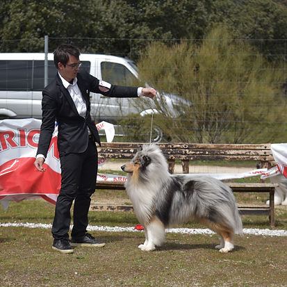 Criaderos de Rough Collie