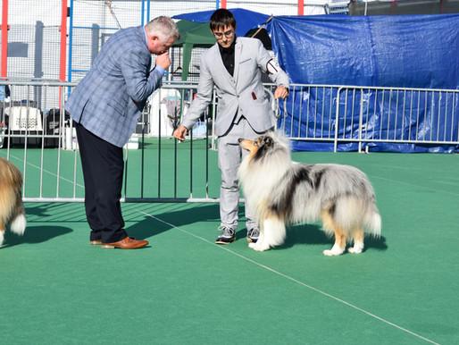 ¿Qué son las exposiciones caninas?