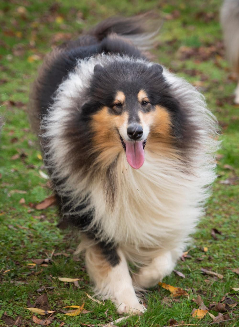 esterilizar perro