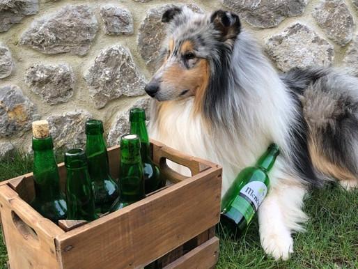 Viajar con tu perro a Asturias