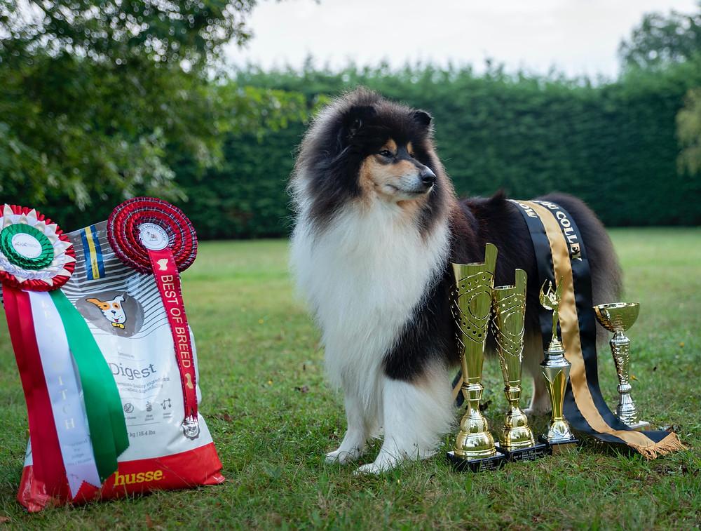 Collie campeón