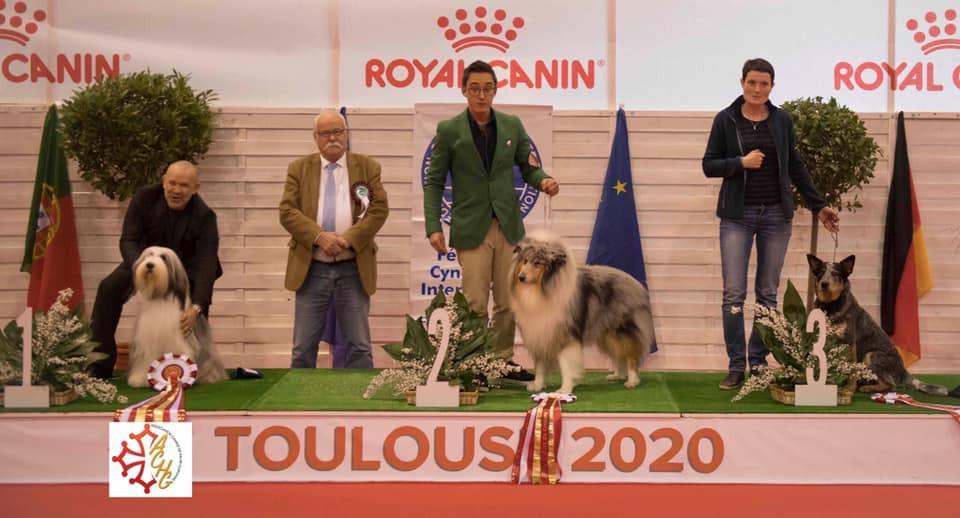 concursos de belleza para perros