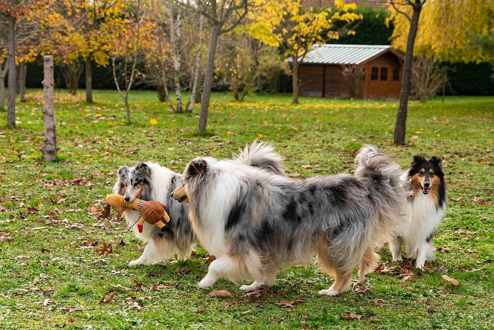 La mejor raza de perro del mundo