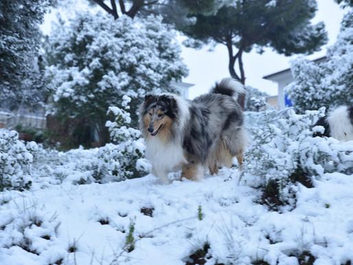Dia de nieve!!!