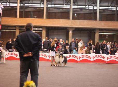 IDS Girona