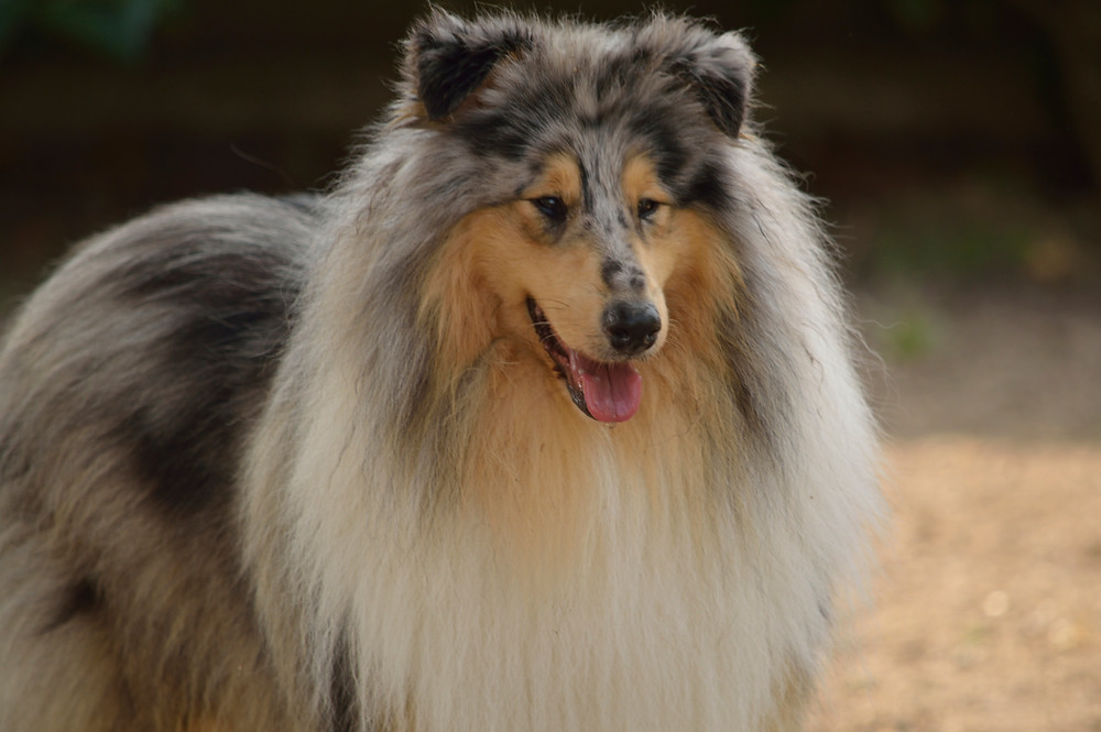esterilización perros