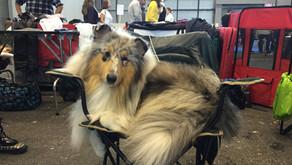 ¿Cómo funcionan las exposiciones Caninas?
