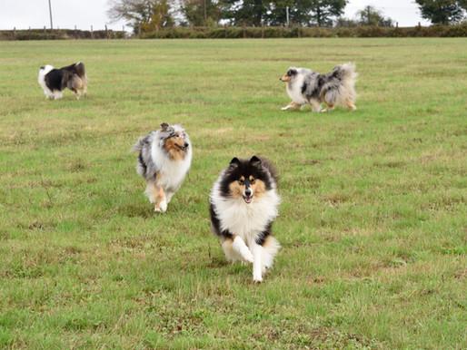 La Mielopatía Degenerativa en el perro pastor escocés (DM)