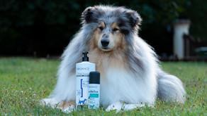 Cuidado del cabello del Rough Collie con Biogance