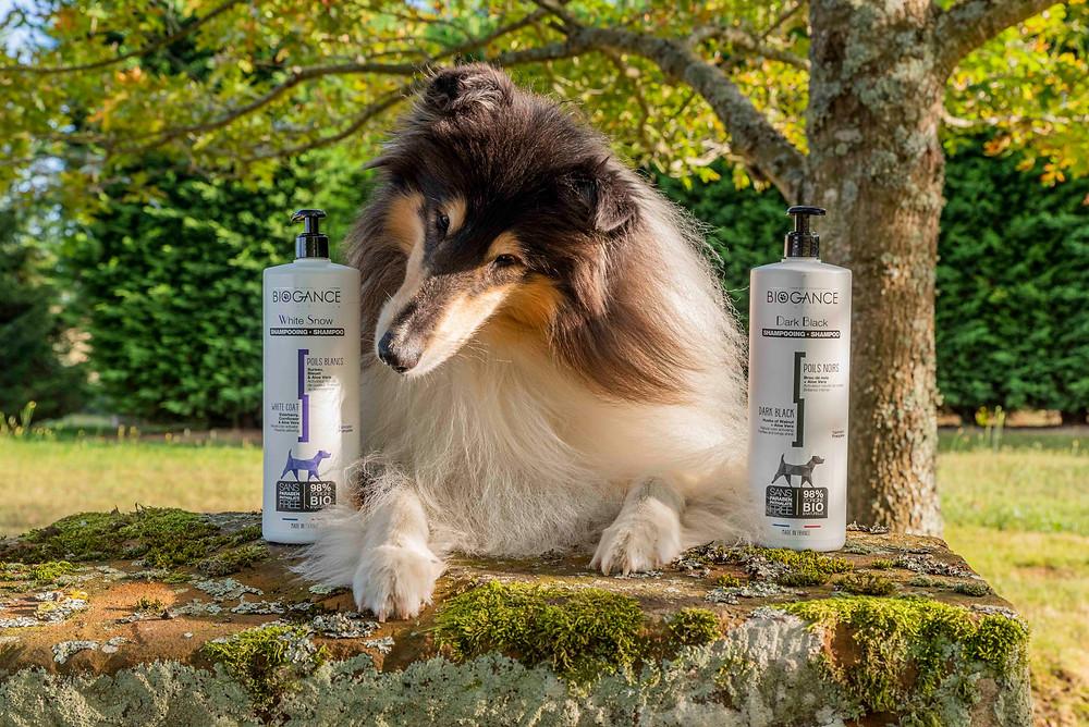 Cuidado del cabello del collie con Biogance