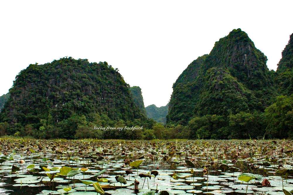 Tam Coc, Hoa Lu, Day trip from Hanoi, Ninh Binh, Vietnam village life, local life in Ninh Binh