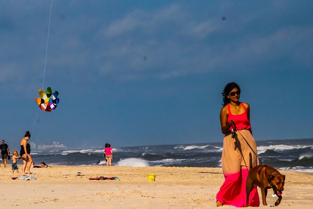 maryland beach, Assateague Island, pet friendly beach, white sand beach, Virginia, maryland