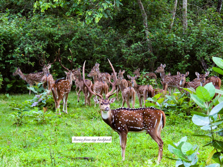 8 Best things to do in Kabini