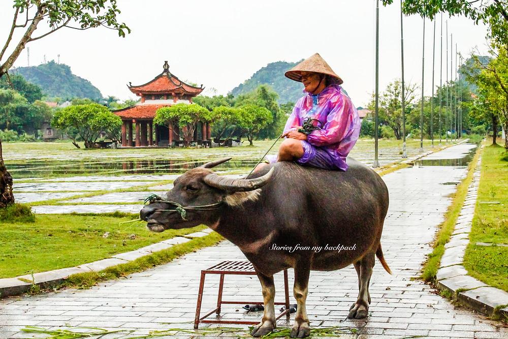 Ninh Binh, Vietnam village life, How to travel to Ninh Binh, Day trip from Hanoi, How to get to Hoa Lu, Hoa Lu to Tam Coc distance, Things to do in Hoa Lu