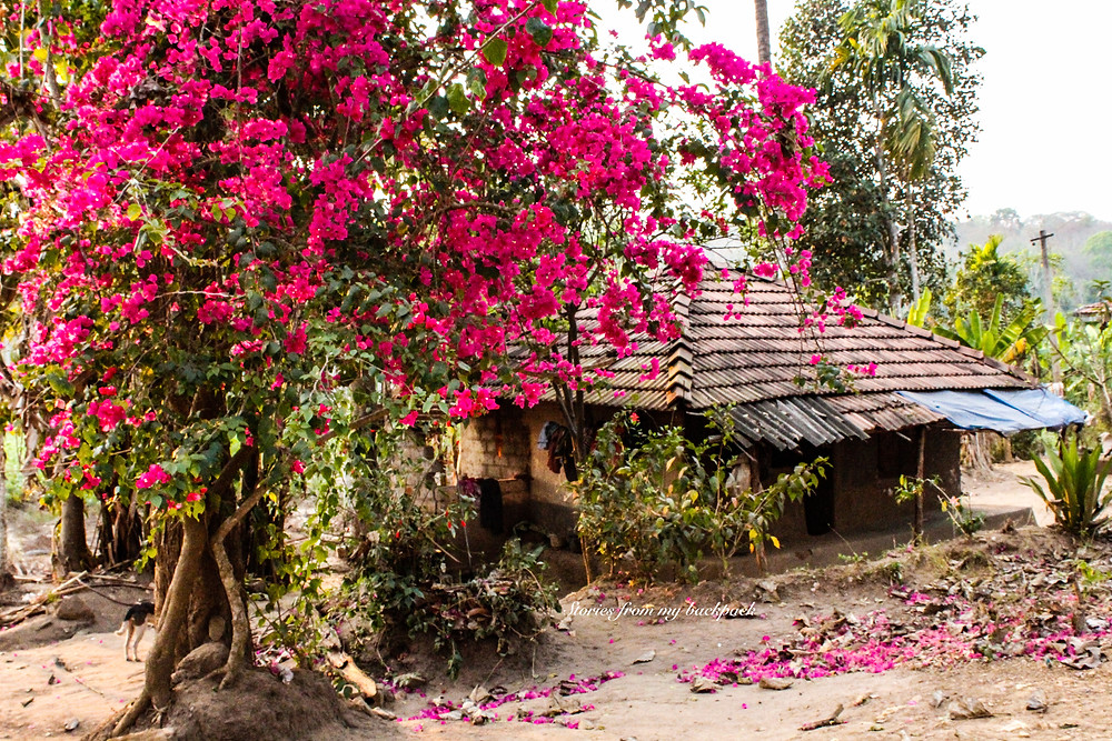 true story from Kerala, stories from Kerala, travel story from Kerala, travel story, travelogue