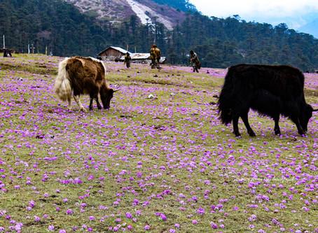 Yumthang Valley & Zero Point
