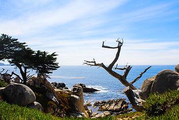 Ghost Tree, 17 Mile drive