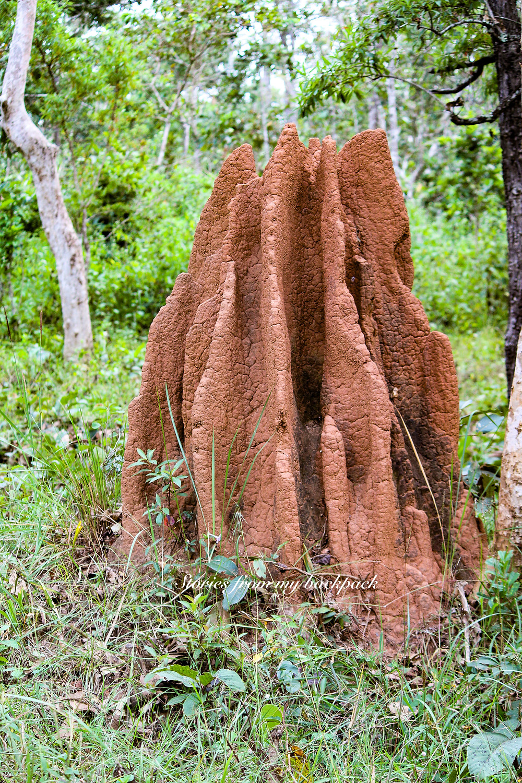 Muthanga wildlife sanctuary, wayanad wildlife sanctuary, wayanad wildlife sighting