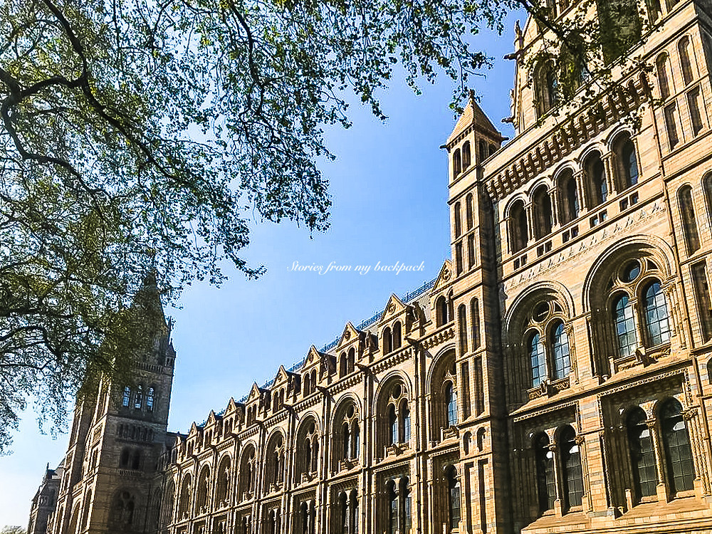 Natural History Museum, Best museums in London, history museum London, big dinosaur museum London