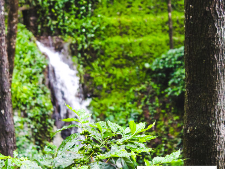 Chikmagalur- A monsoon holiday