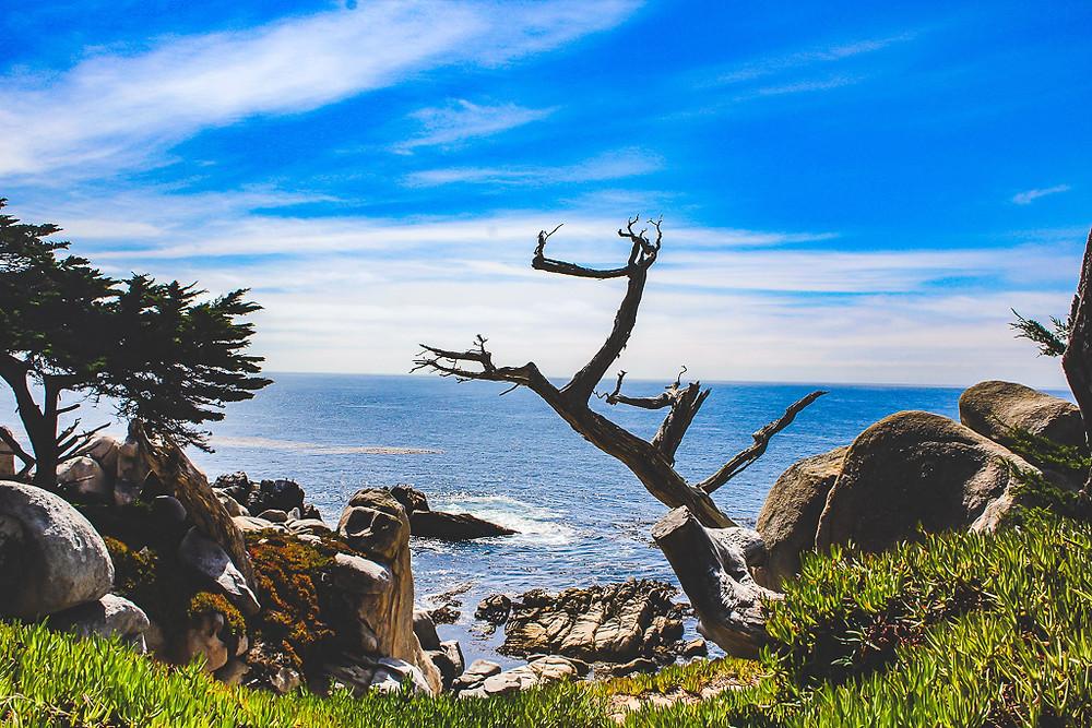 Ghost tree, Witch Tree, 17 mile drive, pebble beach, San Francisco, California, Monterrey bay, scenic drives in California