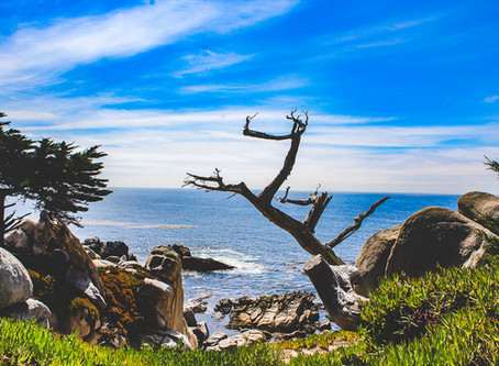 10 Must do things in Monterey, California