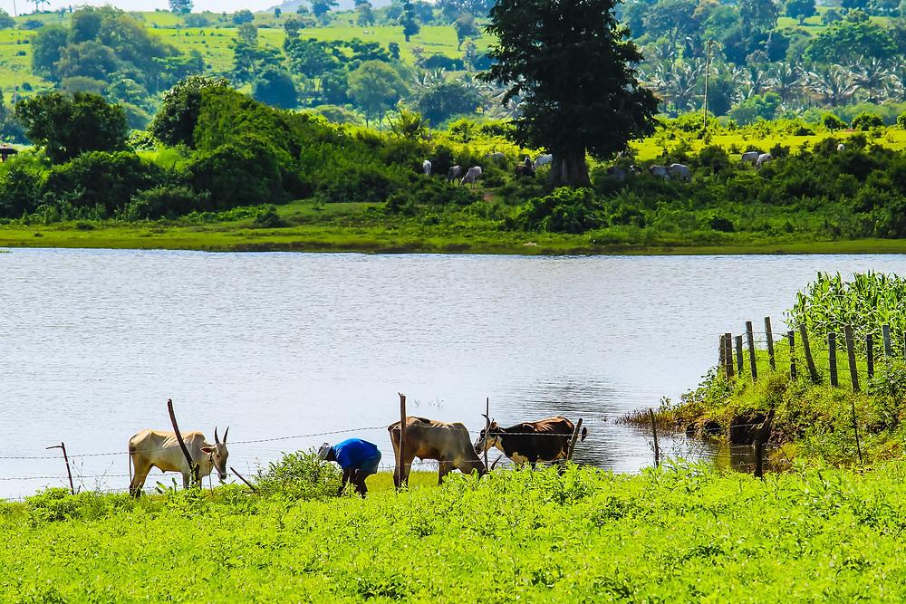 kabini, nagarhole national park, Karnataka tourism, things to do in Karnataka, bullock cart