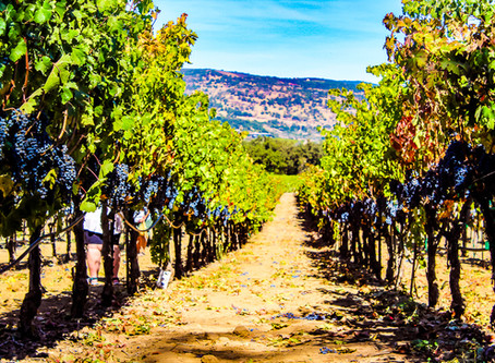 4 best experiences in Napa Valley