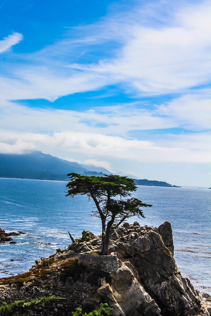 Lone cypress tree, California coast, pacific coast, pacific grove, pebble beach, Monterrey bay, day trip from San Francisco