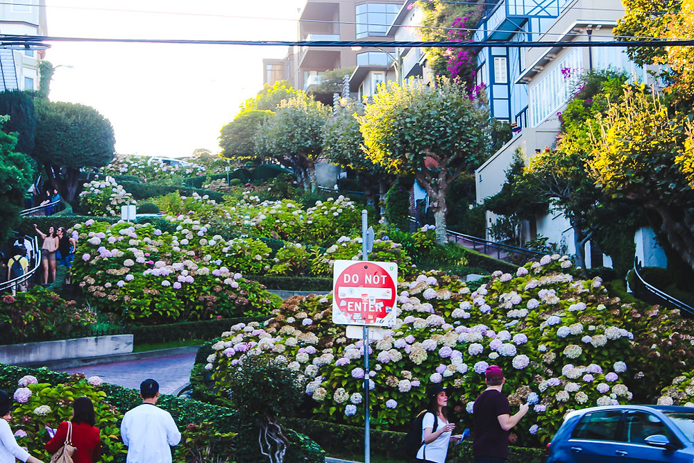 Crooked street in San Francisco, 8 hairpin bends, hydrangea flowers, pretty streets in San Francisco, victorian architecture in San Francisco