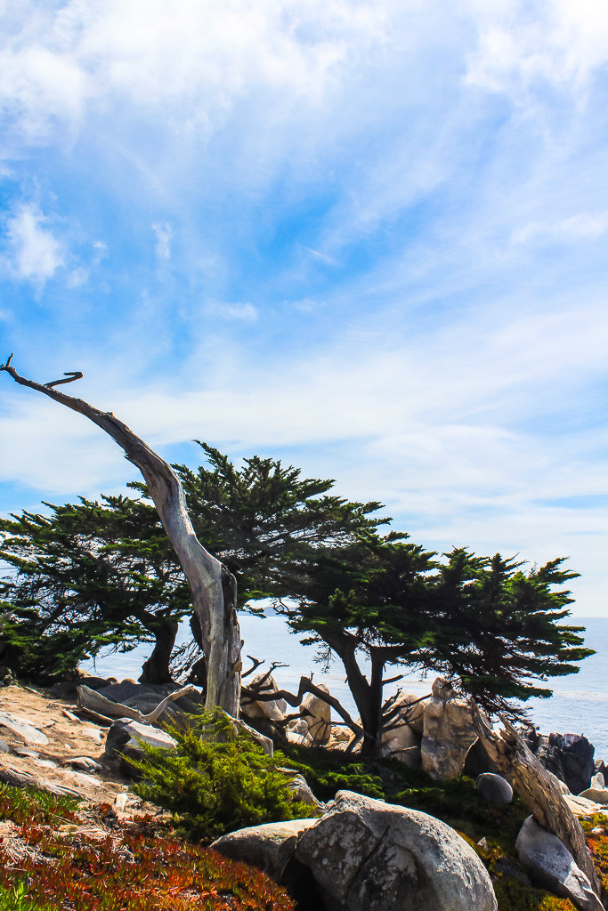 17 mile drive, California coast, pebble beach, pebble beach golf course, tiger woods, pebble beach golf rates, pebble beach hotels