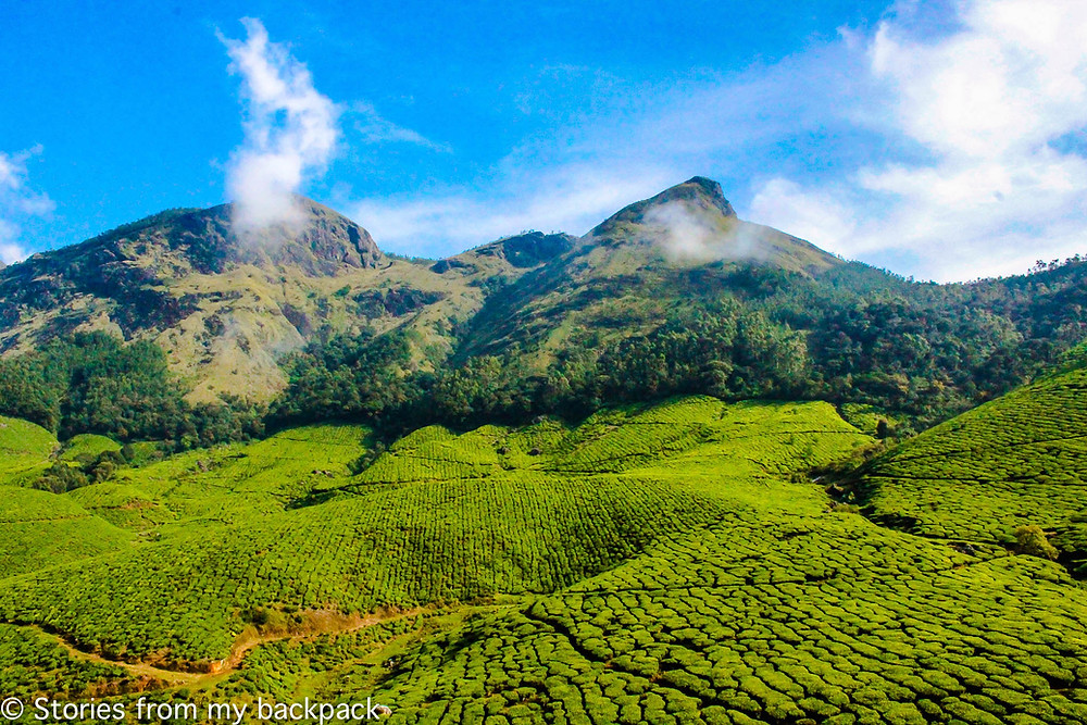 highest tea plantation in the world, Harrison Malayalam tea plantation, tea estate tour, tea estate activities, tea plantation tour, how to get to Kolukkumalai, Munnar tea plantation timings, things to do in Munnar, Munnar top attractions