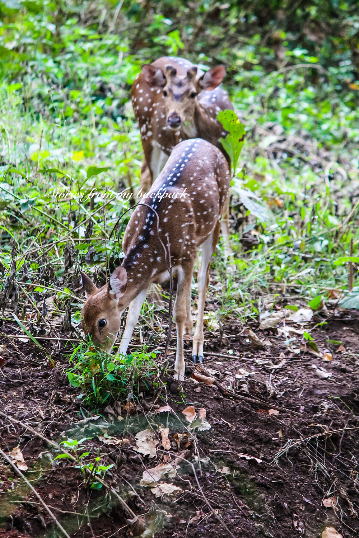 Wayanad wildlife sanctuary, wayanad wildlife sanctuary timings, how to visit way and wildlife sanctuary, Muthanna wildlife sanctuary, Bandipur wildlife sanctuary