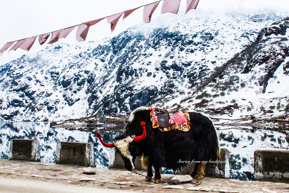 yak safari in sikkim, things to do in Sikkim, best attractions in Sikkim, baba mandir visit, why visit baba mandir, history of baba mandir, legend of baba mandir