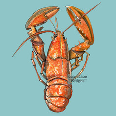 Fish – Orange Lobster – blue – watercolour artwork