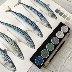 Fishing for shimmering mackerel - and then painting them