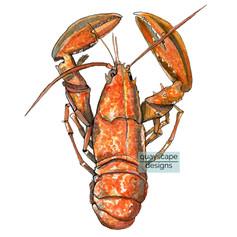 Fish – Orange Lobster – watercolour artwork
