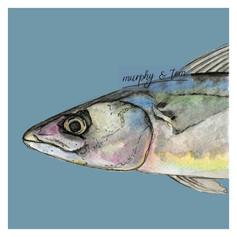 Fish – Mackerel head – Blue – watercolour artwork