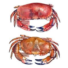 Fish – crabs – watercolour artwork
