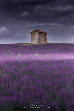 16- Provence