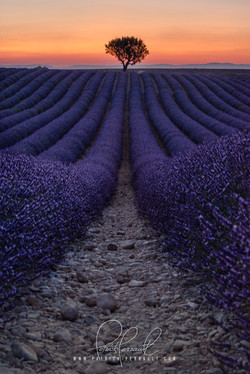 12- Provence