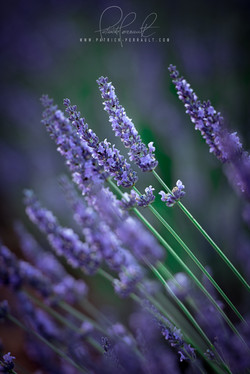 18- Provence
