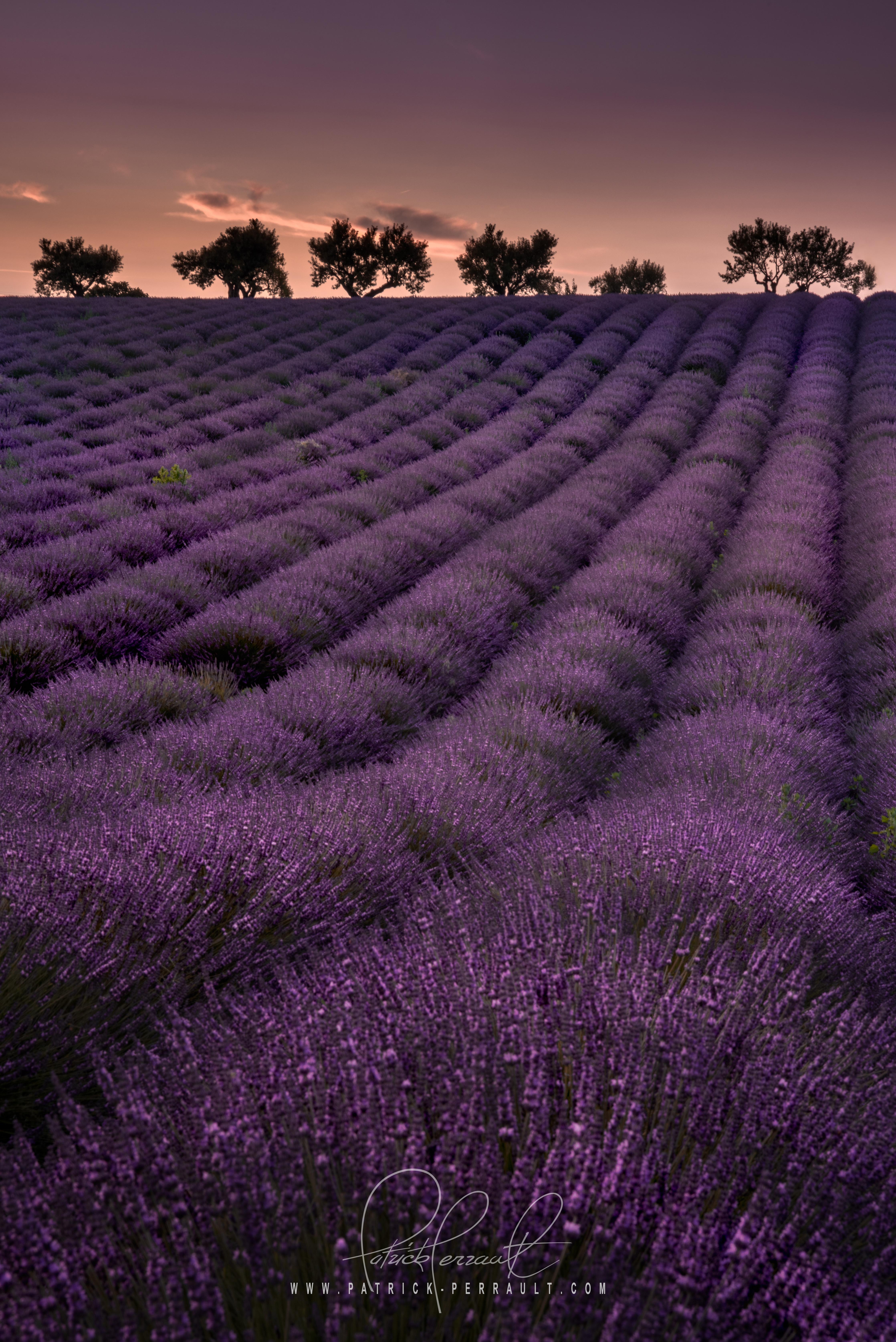 23- Provence